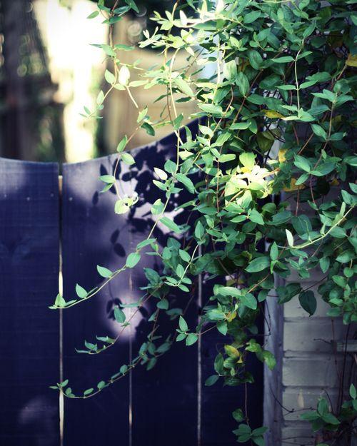 Gardengate8x10